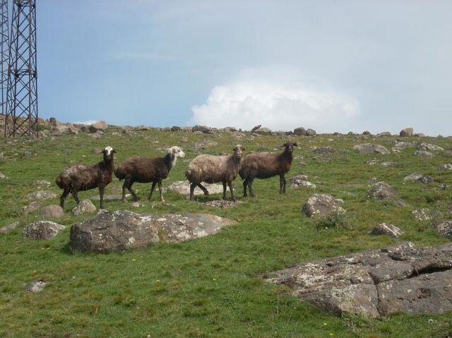 Zdj�cia: Pobli�e g�ry Aragats, Ach te spojrzenia..., ARMENIA