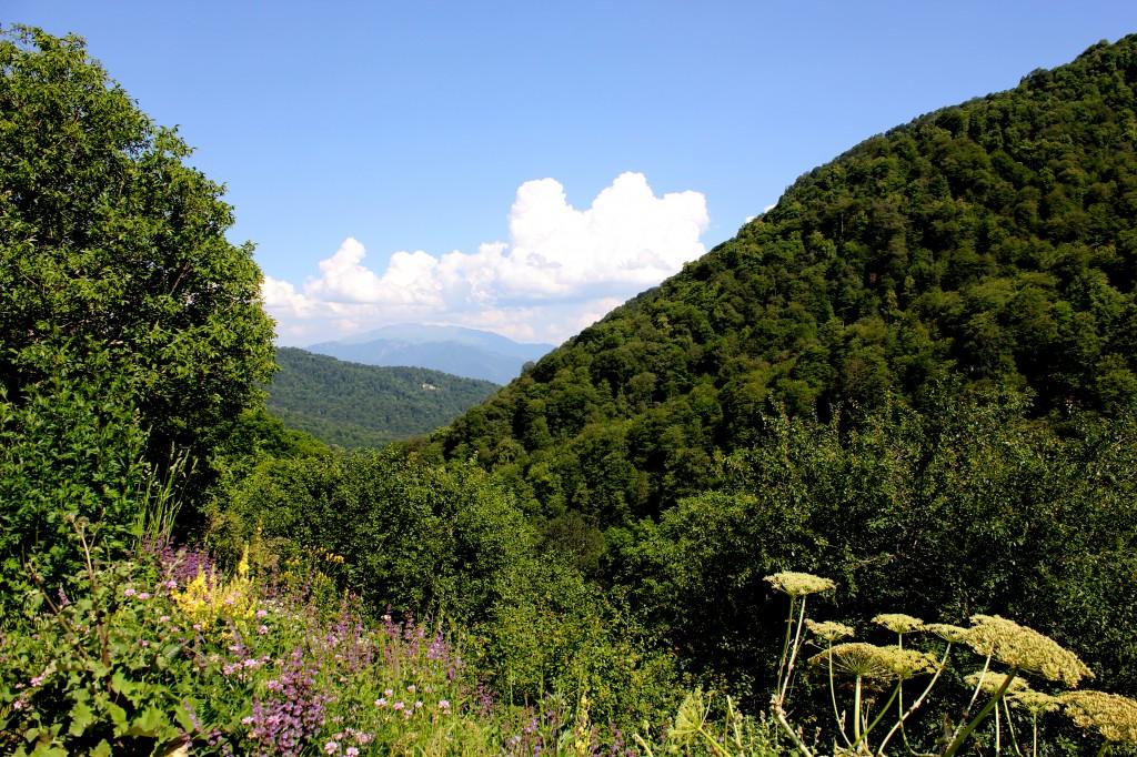 Zdjęcia: Park Narodowy Dilijan, Prowincja Tavush, Górska dżungla, ARMENIA