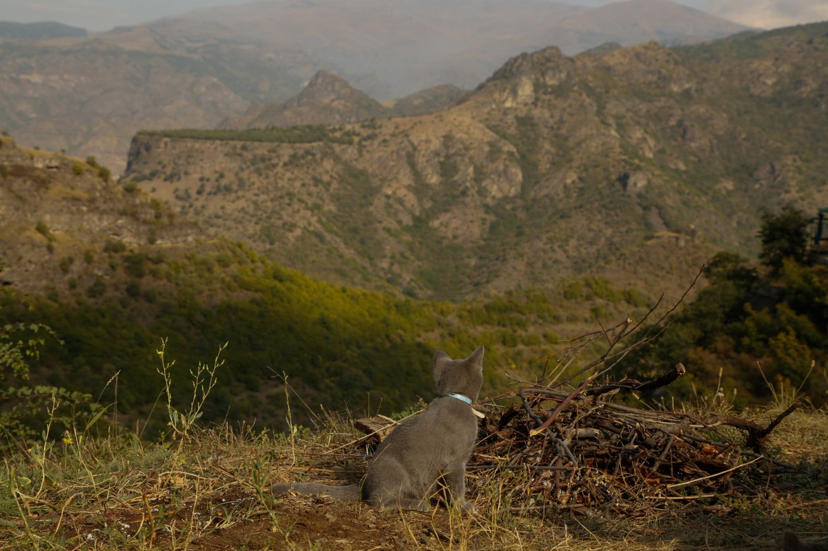 Zdjęcia: ok. Alawerdi, płn-wsch Armenia, Kot też docenia..,.., ARMENIA