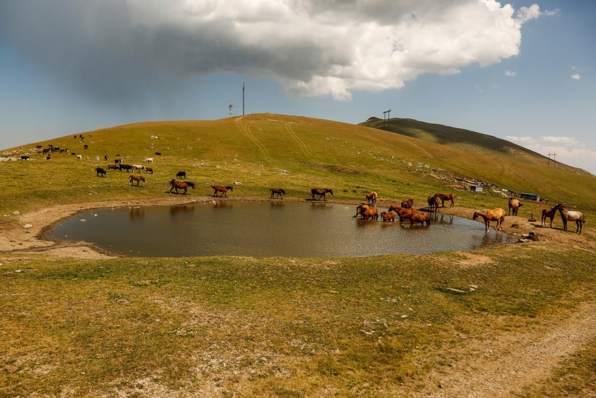 Zdjęcia:  połonina nad Meghradzor, płn-wsch Armenia, Z wizytą u koczowników..., ARMENIA