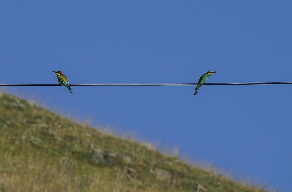 Zdjęcia: Górski Karabach, Arcach, Obrażalskie..., ARMENIA