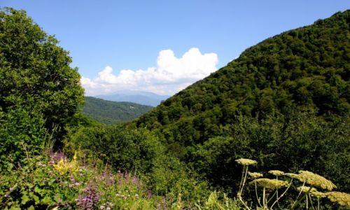 Zdjecie ARMENIA / Prowincja Tavush / Park Narodowy Dilijan / Górska dżungla