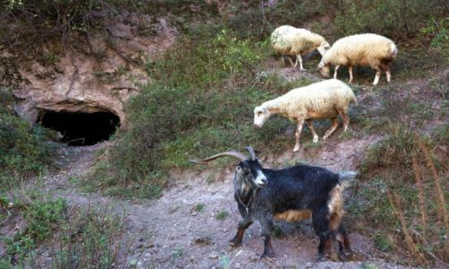 Zdjecie ARMENIA / Sjunik  / Stare Goris / Na straży