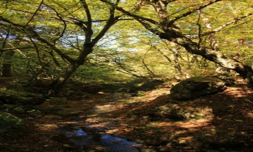 Zdjecie ARMENIA / Shirak / Okolice Gyumri  / Ogród dendrolog