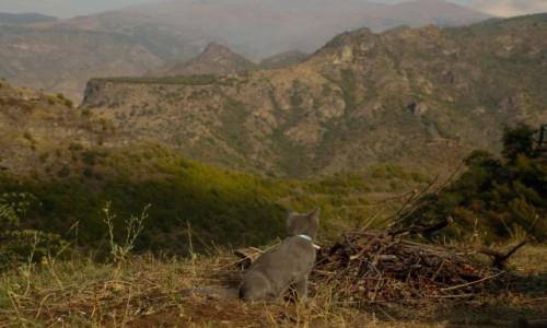 Zdjecie ARMENIA / płn-wsch Armenia / ok. Alawerdi / Kot też docenia..,..