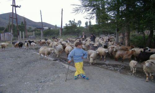 Zdjecie ARMENIA / Armenia / Pambak / Ormianski pastuszek