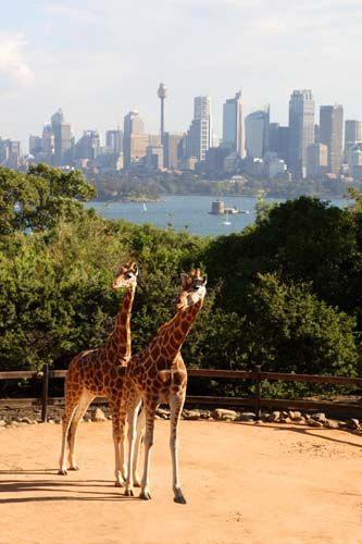 Zdjęcia: Sydney, Taronga Zoo, Nowa Południowa Walia, Widok za milion dolarów, AUSTRALIA