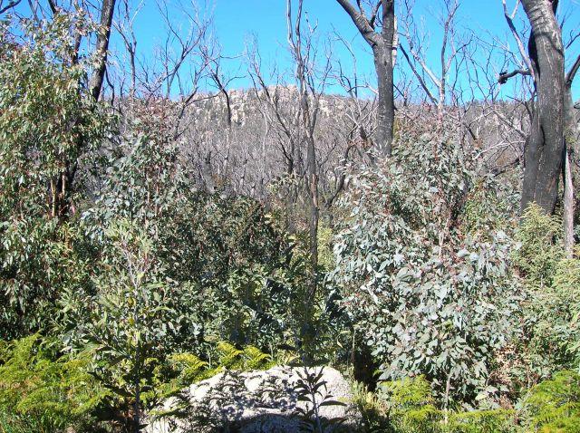 Zdjęcia: Namadgi nat. Park, ACT, Alpy i las.., AUSTRALIA