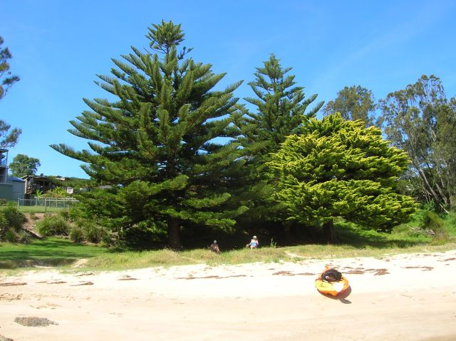 Zdjęcia: Broulee, NSW, Roslinnosc nad oceanem., AUSTRALIA
