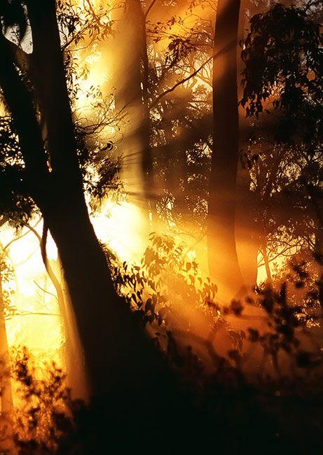 Zdjęcia: Mt Lofty, South Australia, eukaliptusowy poranek, AUSTRALIA