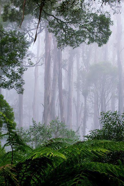 Zdjęcia: Otway Range, Victoria, las deszczowy, AUSTRALIA