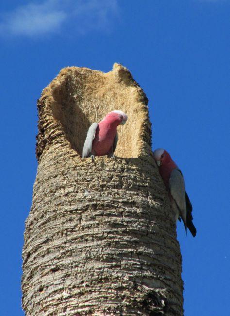 Zdjęcia: plaża, Busshelton, Ciekawe gniazdo, AUSTRALIA