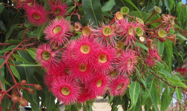 Zdjęcia: park, Albany, jesień w Australii, AUSTRALIA