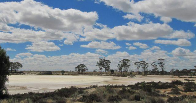 Zdjęcia: Droga do Hyden, Pn od Albany, okolice Lake Grace, AUSTRALIA