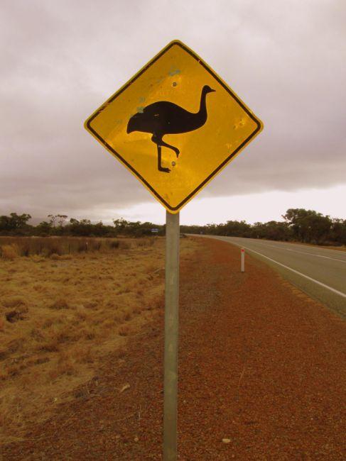 Zdjęcia: szosa, Busselton, Uwaga  strusie, AUSTRALIA