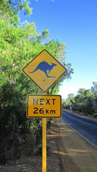 Zdjęcia: szosa, Bunbury, uwaga kangury, AUSTRALIA