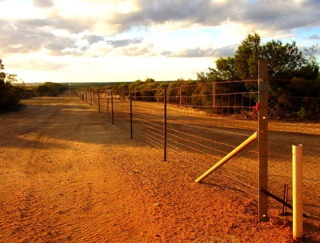 Zdjęcia: droga, Hyden, zasieki przeciw królikom, AUSTRALIA
