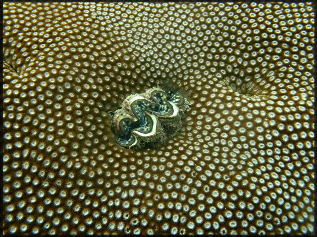 Zdjęcia: great Barrier  reef, great Barrier  reef, Nurkowanie, AUSTRALIA