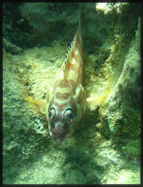 Zdjęcia: great Barrier  reef, great Barrier  reef, Czy te oczy mogą kłamać?, AUSTRALIA