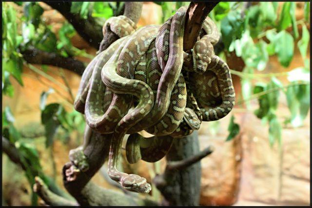 Zdjęcia: Sydney, Wildlife, Nowa Południowa Walia, Dla spostrzegawczych: policz węże!, AUSTRALIA