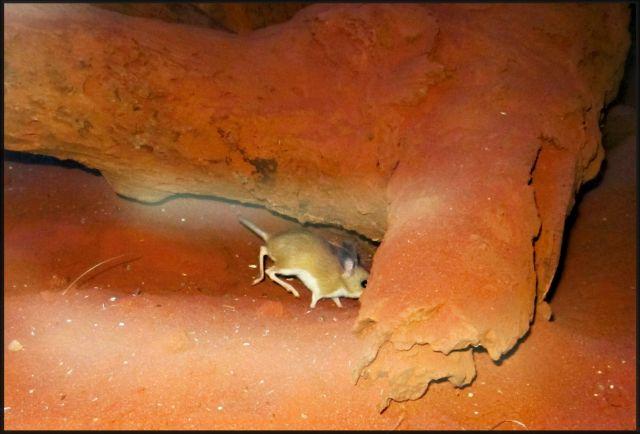 Zdjęcia: Sydney, Wildlife, Nowa Południowa Walia, Skoczek, AUSTRALIA