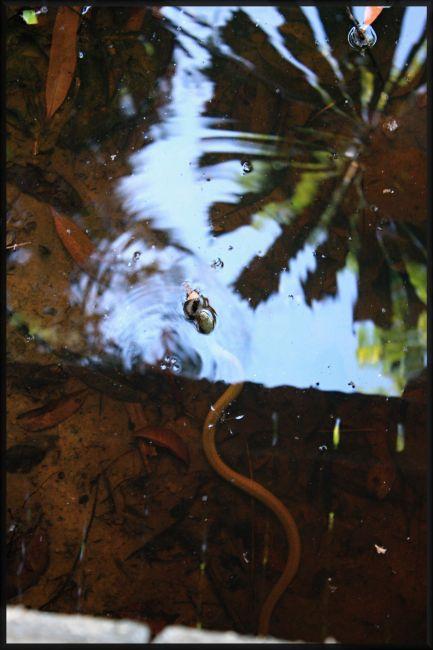 Zdjęcia: okolice Cairns, rainforrest, queensland, wąż...a może wężyk...?, AUSTRALIA