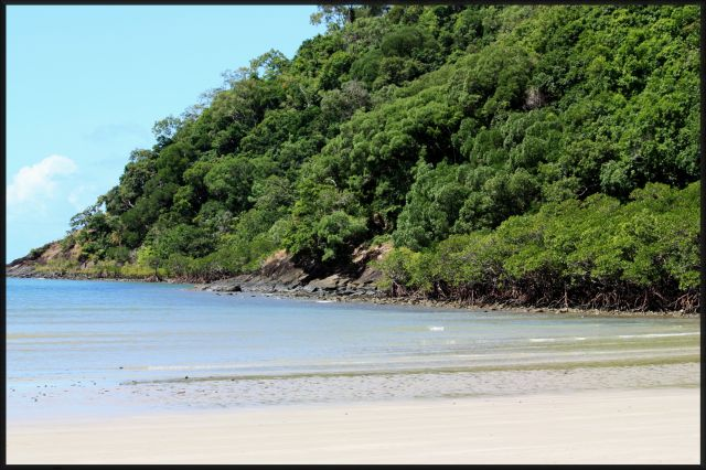 Zdjęcia: okolice Cairns, , queensland, las namorzynowy od strony oceanu, AUSTRALIA