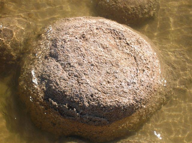 Zdjęcia: Lake Clifton, Zach.Australia, Thrombolit z bliska, AUSTRALIA