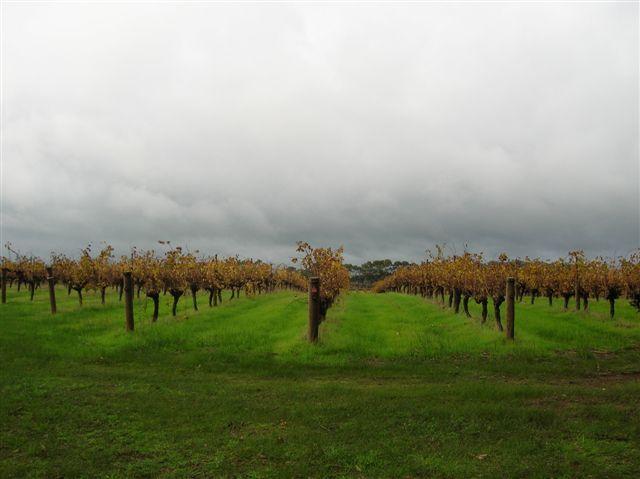 Zdjęcia: Margaret River, WA, Winnice w Margaret River, AUSTRALIA