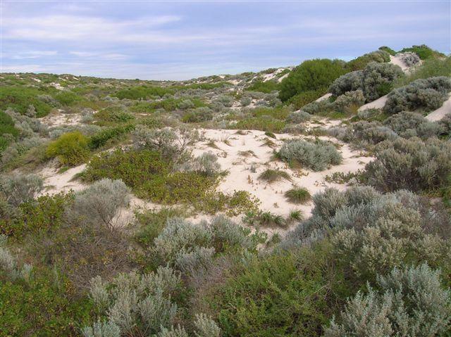Zdjęcia: Perth, WA, Wydmy przy Scarborough Beach, AUSTRALIA
