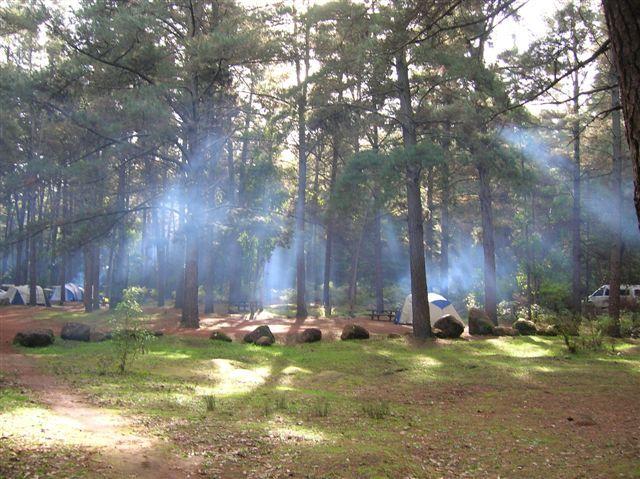 Zdjęcia: Dwellingup, Zach.Australia, W Jarra forest-camping, AUSTRALIA