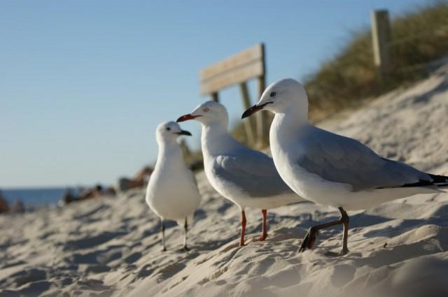 Zdjęcia: Perth, Zachodnia Australia, Ziomki na miejscówce, AUSTRALIA