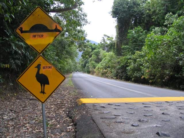 Zdjęcia: Cape Tribulation, Meantime, AUSTRALIA