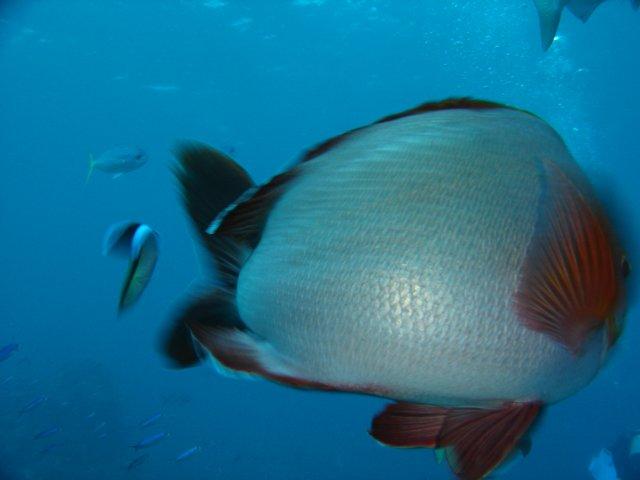 Zdjęcia: Wielka Rafa Koralowa, )=o>, AUSTRALIA