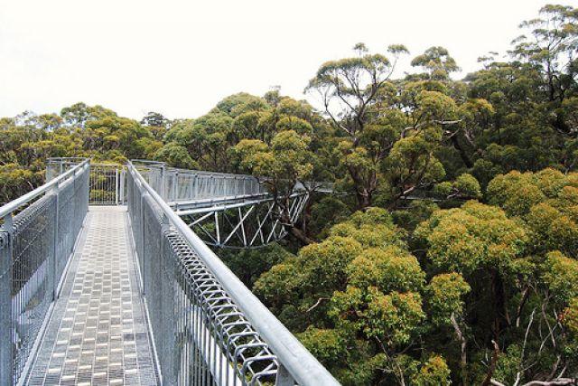 Zdjęcia: Denmark, Zachodnia Australia, giants tree top walk (walpole-nornalup national park), AUSTRALIA