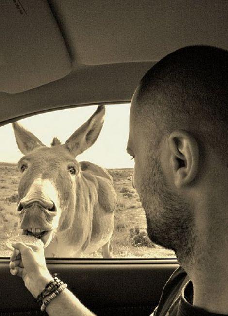 Zdjęcia: Silverton, skuszony na styropian, AUSTRALIA