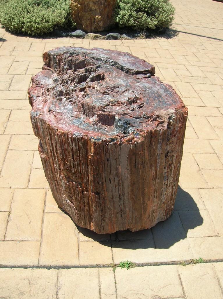 Zdjęcia: Muzeum dinosaurow, ACT, Kamienne drzewo, AUSTRALIA