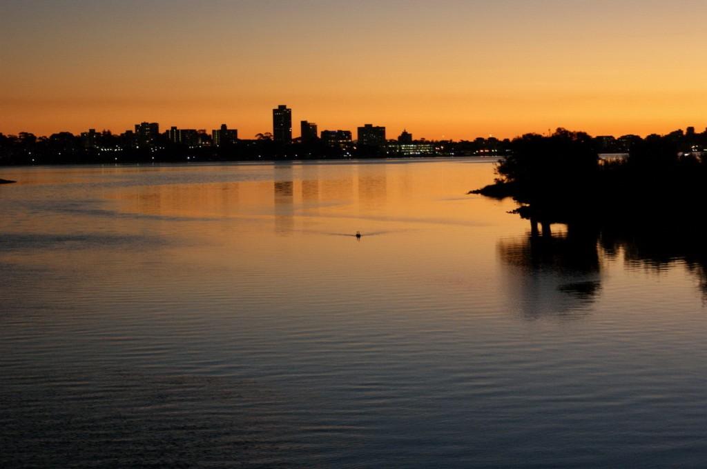 Zdjęcia: Perth, Zachodnia Australia, Zakochane Łabędzie, AUSTRALIA