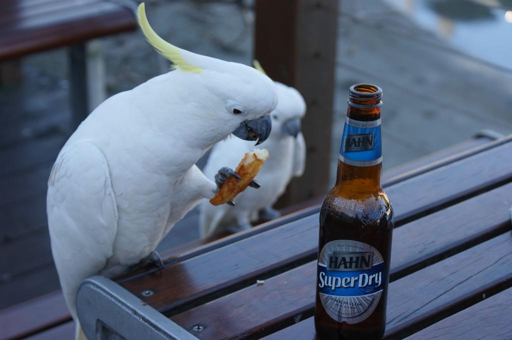 Zdjęcia: Hamilton Island, Queensland, Lunch time, AUSTRALIA