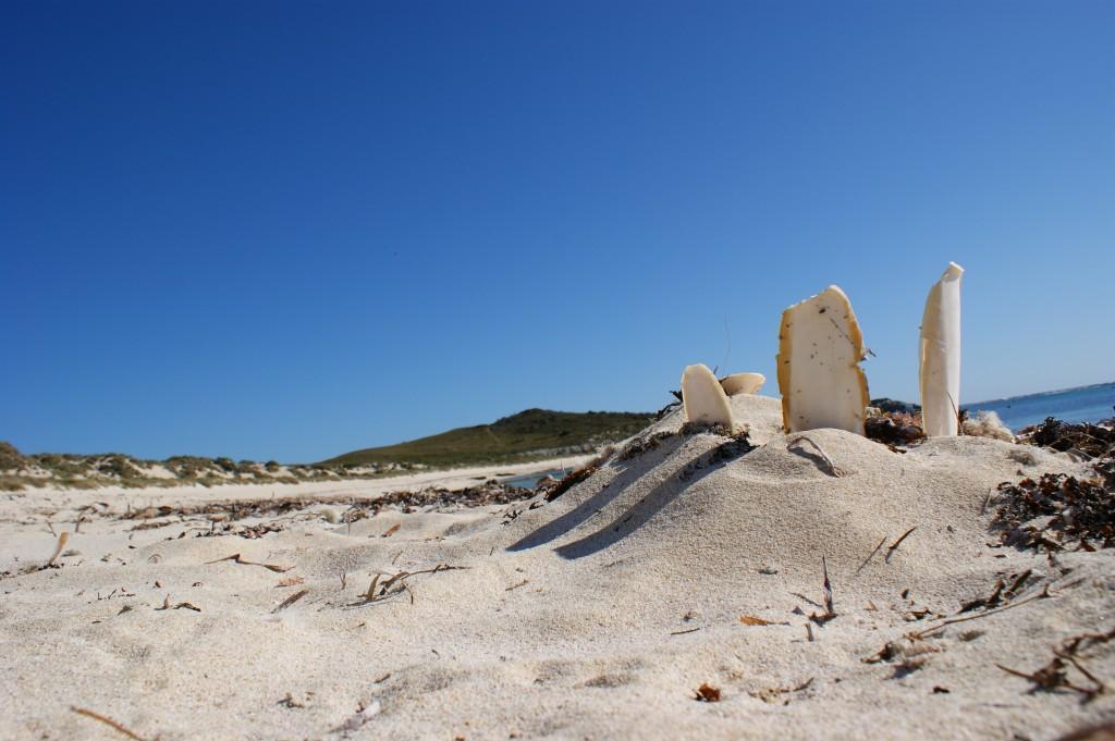 Zdjęcia: Rottnest Island, Zachodnia Australia, Plaża, AUSTRALIA