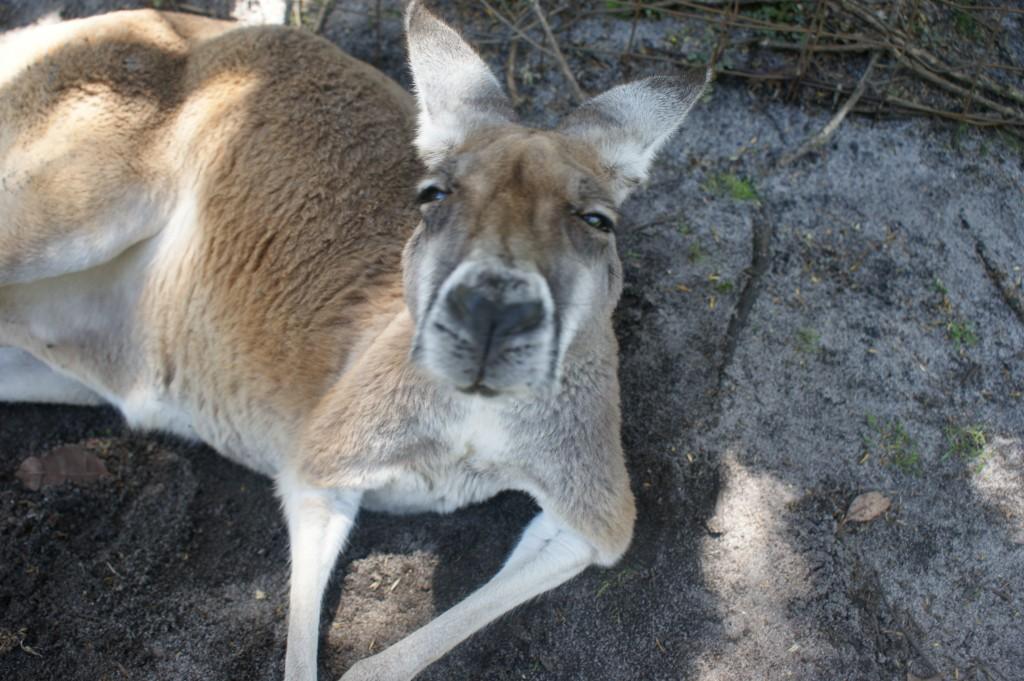 Zdjęcia: Perth, Zachodnia Australia, What's up doc??, AUSTRALIA