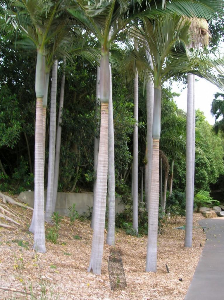 Zdjęcia: Australian National Botanic Garden, Zach Sydney, Proste jak panienki, AUSTRALIA