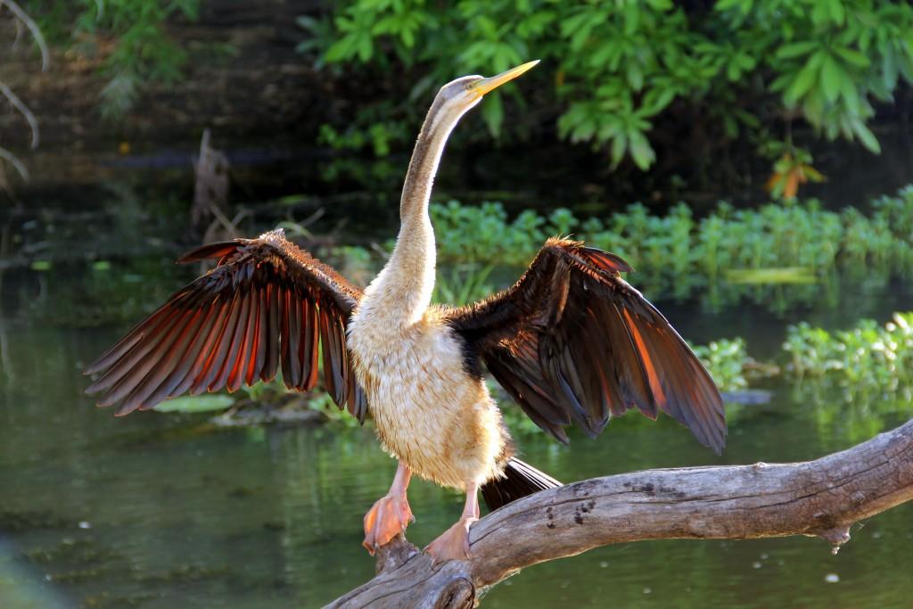 Zdjęcia: Park Kakadu, Terytorium Północne, Nowi przyjaciele, AUSTRALIA