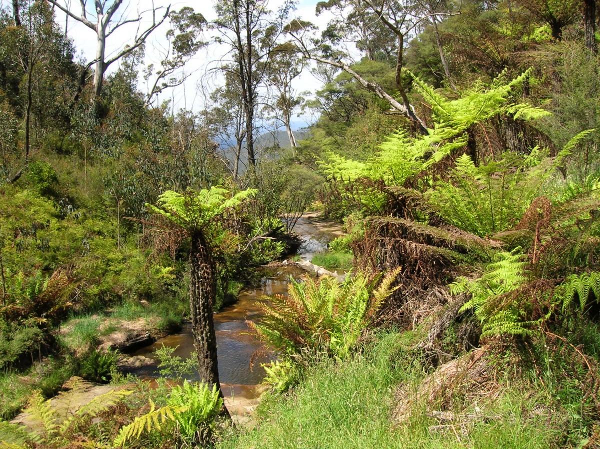 Zdjęcia: Katoomba, NSW, Jak w raju.., AUSTRALIA