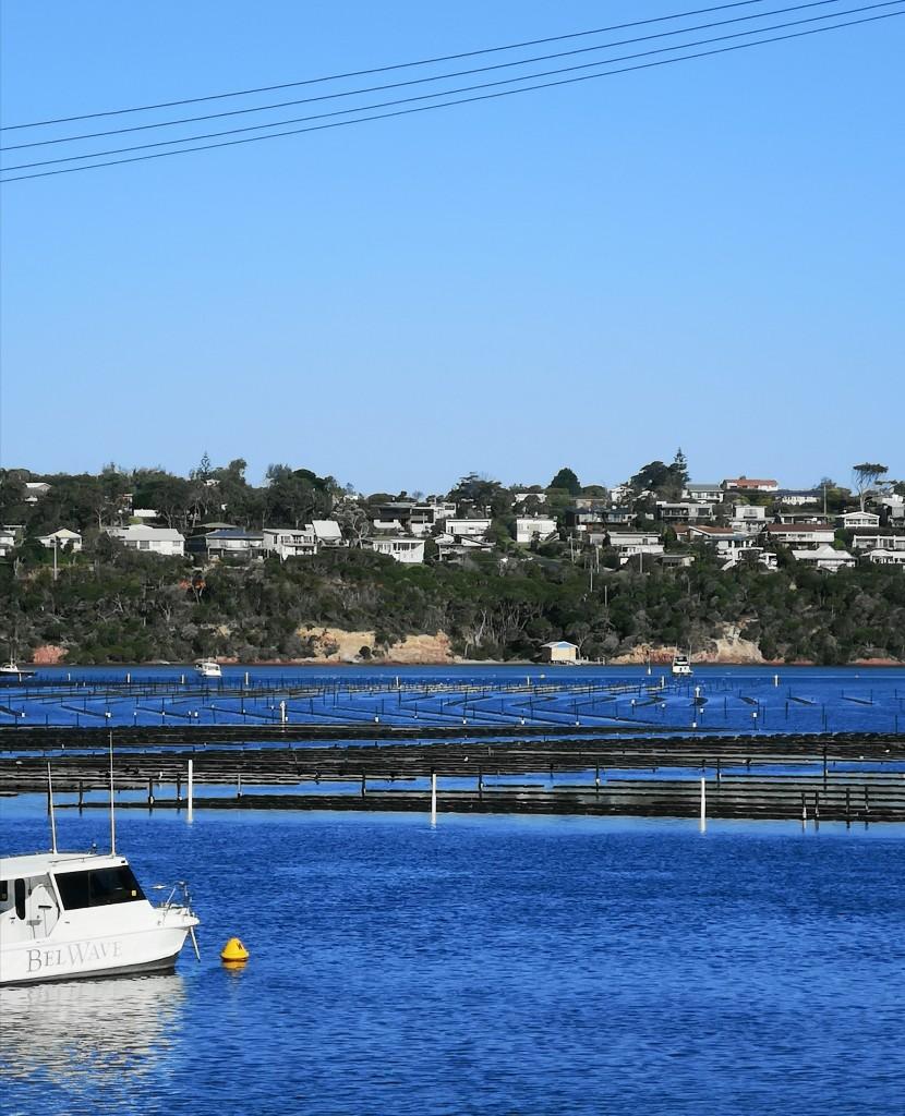 Zdjęcia: Merimbula , NSW , Farma ostryg , AUSTRALIA