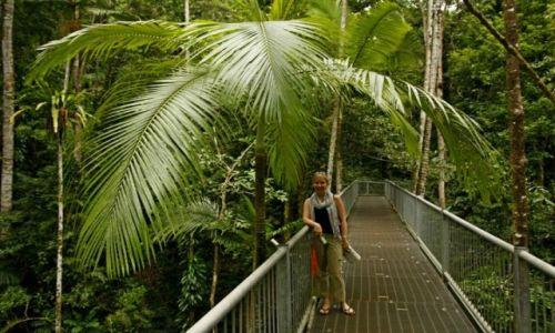 AUSTRALIA / Queensland / Daintree Discovery Center / Roslinnosc lasu deszczowego