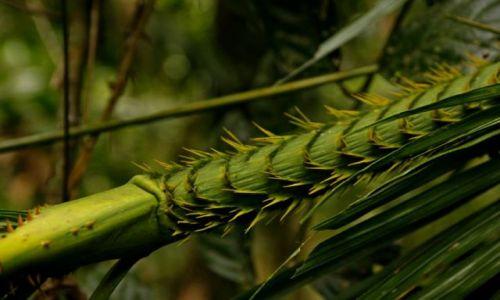 AUSTRALIA / Queensland / Daintree Discovery Centre / Roslinnosc lasu deszczowego