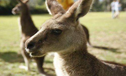 Zdjecie AUSTRALIA / Queensland / Brisbane / Lubie jak mnie fotografuja;-)