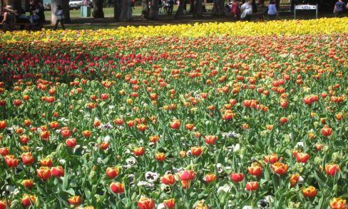 Zdjęcie AUSTRALIA / Canberra / W canberskim parku / Floriada--swieto kwiatow