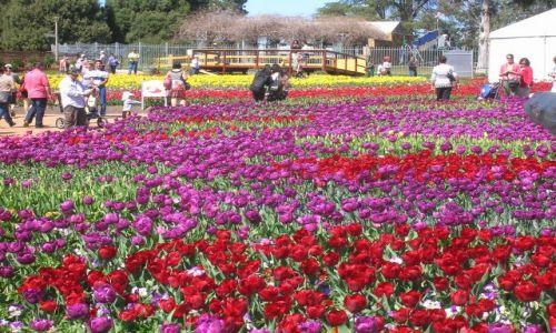 Zdjęcie AUSTRALIA / Canberra / W canberskim parku / Floriada--swieto kwiatow w Canberze-stolicy Australii